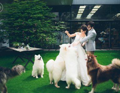 anh cuoi phim truong 9 384x300 - Top 4 phong cách chụp ảnh cưới hot nhất hiện nay
