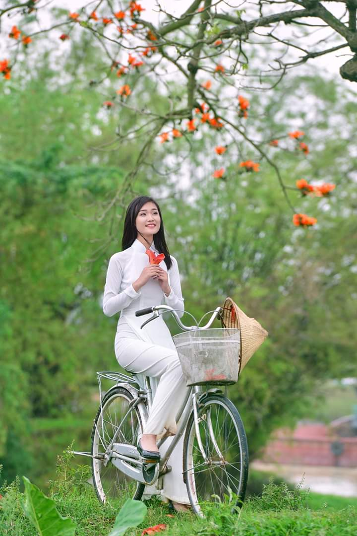 Tạo dáng áo dài với xe đạp và hoa phượng